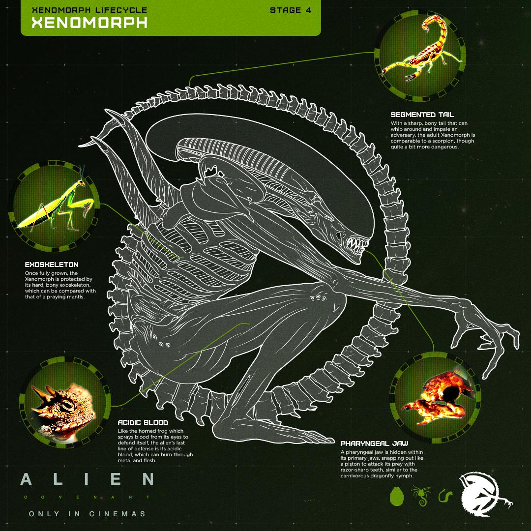 Xenomorph_V5